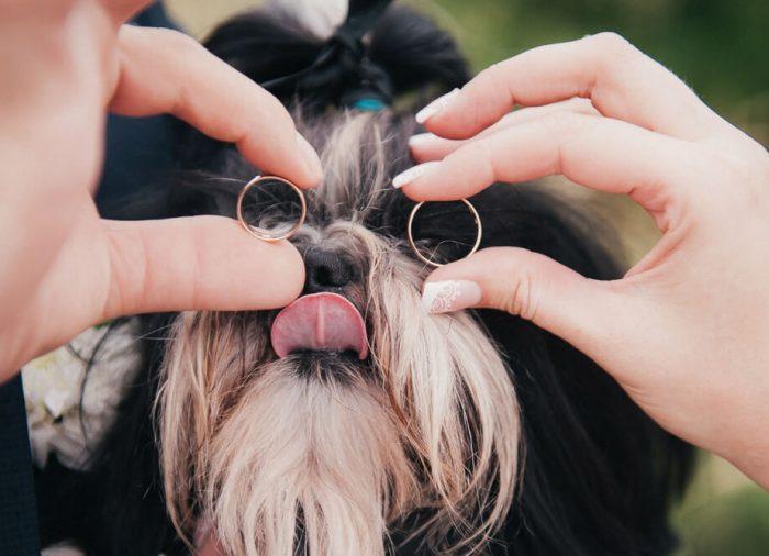 愛犬も結婚式に参加出来る!話題のペットウエディングとは?