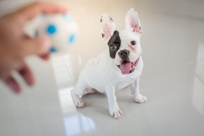 ボールキャッチが大好きな愛犬