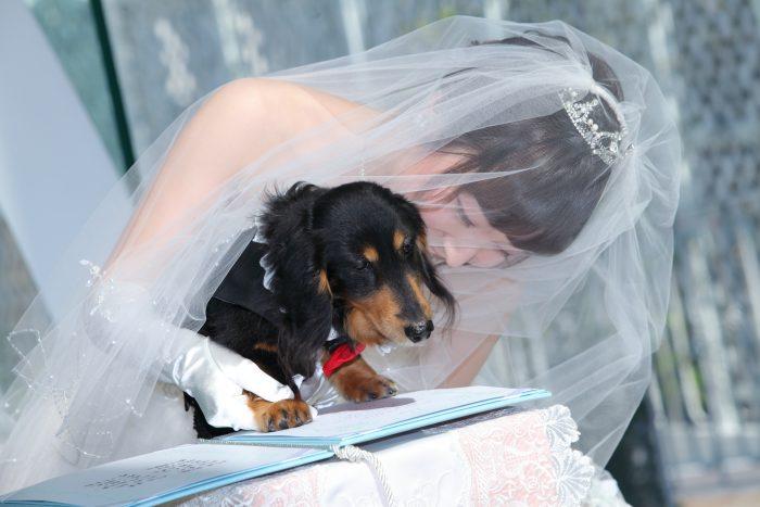 結婚証明書に肉球サインで他にはない記念を