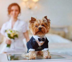 ペットウエディングで愛犬も一緒に結婚式を!演出や準備方法を解説