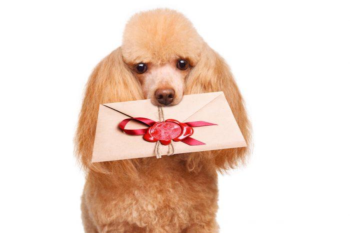 招待状を加える犬